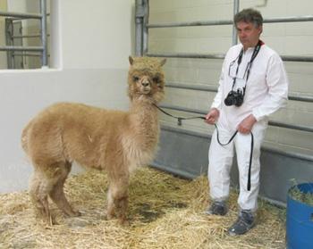michael j dixon alpaca